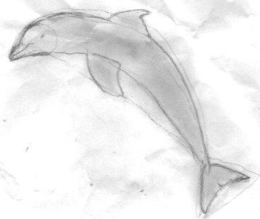 Charcoal drawing of dolphin by Hope, 2013